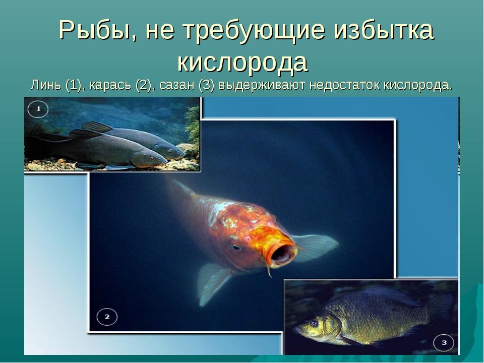 Рыбы, не требующие избытка кислорода Линь (1), карась (2), сазан (3) выдержи...