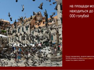 на площади могло находиться до 35 000 голубей Раньше подкармливали .ородская