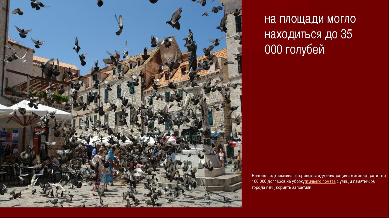 на площади могло находиться до 35 000 голубей Раньше подкармливали .ородская...