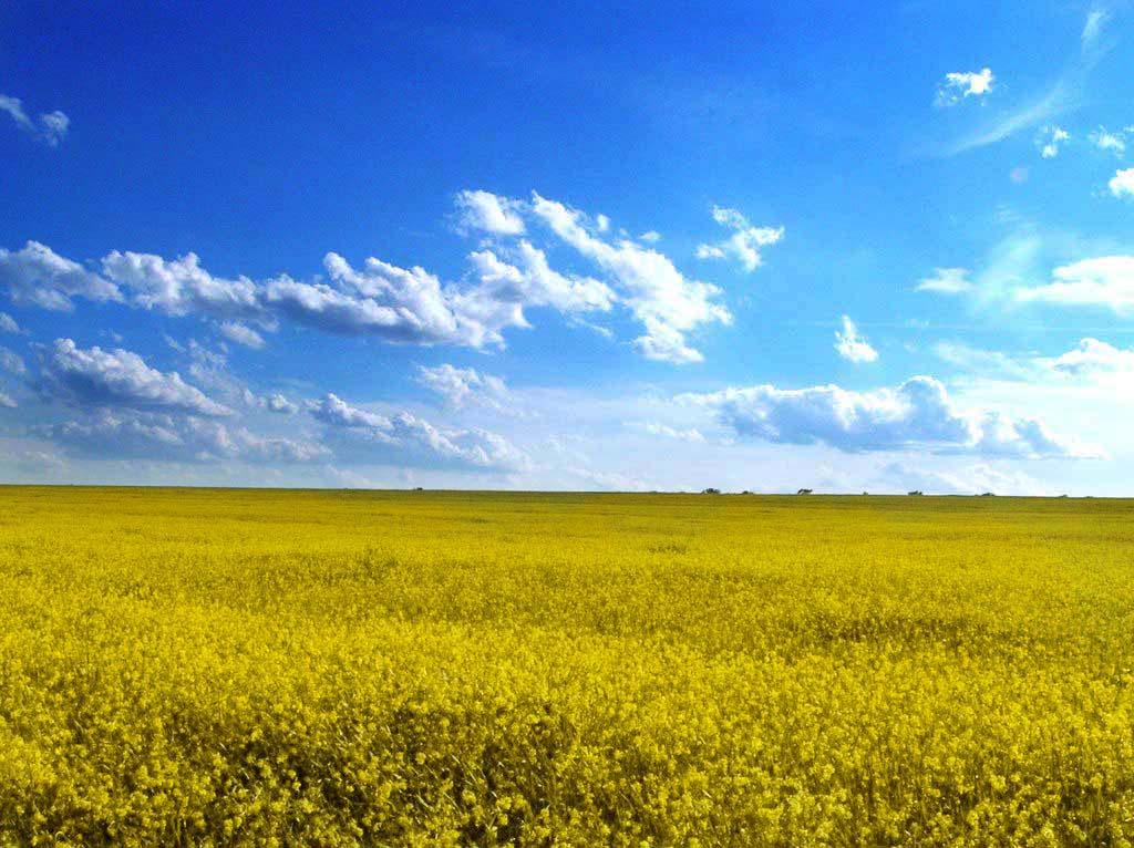 Odessa_oblast'_field.jpg