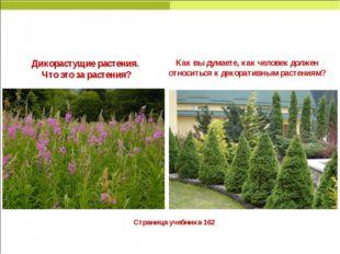 Страница учебника 162 Дикорастущие растения. Что это за растения? Как вы дум