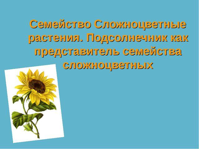 Семейство Сложноцветные растения. Подсолнечник как представитель семейства сл...
