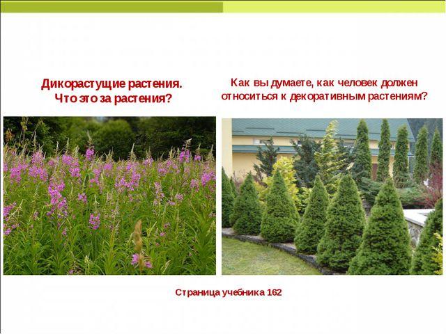 Страница учебника 162 Дикорастущие растения. Что это за растения? Как вы дум...