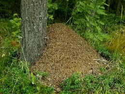 Картинки по запросу картинка муравейник для детей