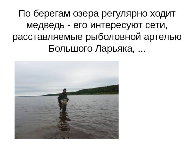 По берегам озера регулярно ходит медведь - его интересуют сети, расставляемые...