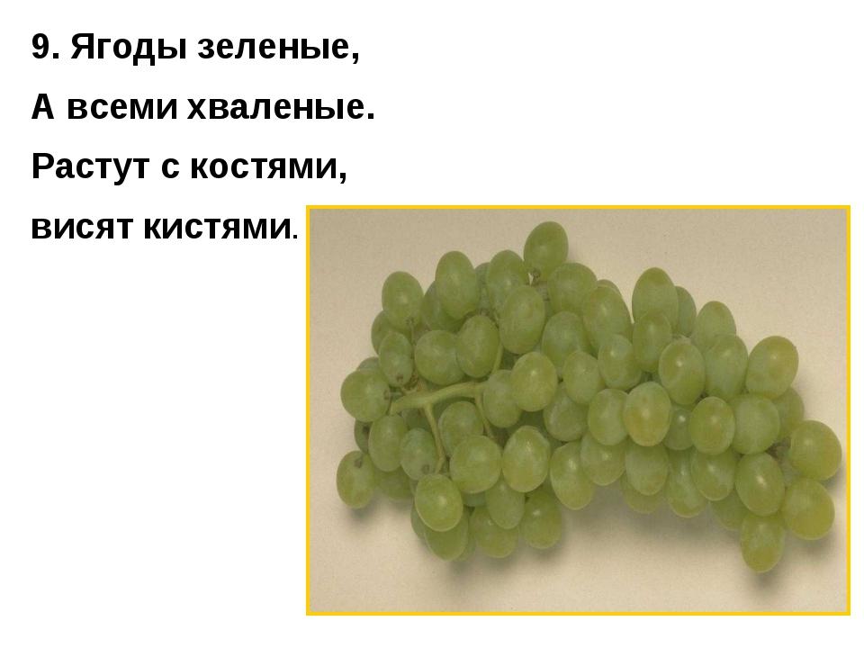 9. Ягоды зеленые, А всеми хваленые. Растут с костями, висят кистями.