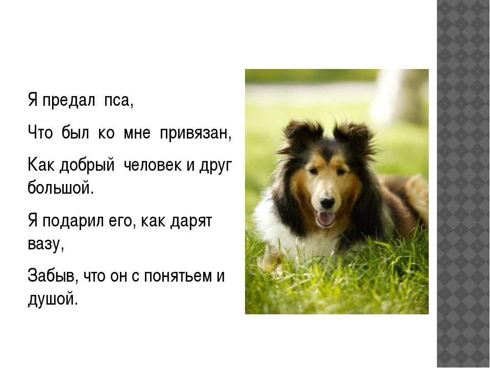 Я предал пса, Что был ко мне привязан, Как добрый человек и друг большой. Я...