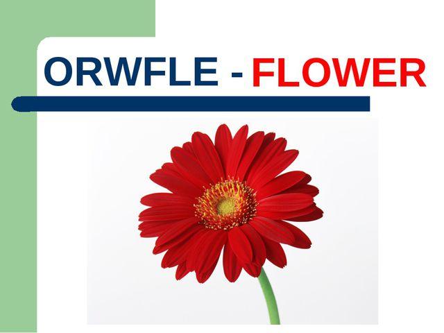 ORWFLE - FLOWER
