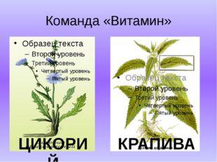 Команда «Витамин» ЦИКОРИЙ КРАПИВА