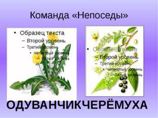 Команда «Непоседы» ОДУВАНЧИК ЧЕРЁМУХА