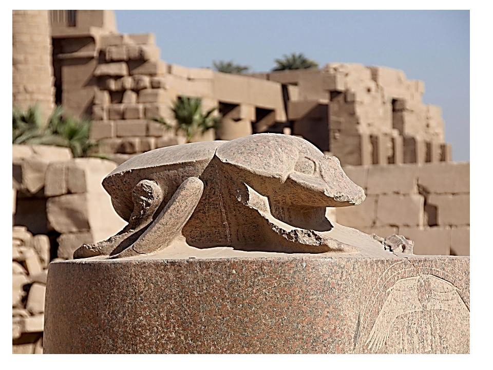 В Египте есть даже большая каменная скульптура жука скарабея. Считается, что...
