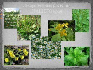 Лекарственные растения НАШЕГО края