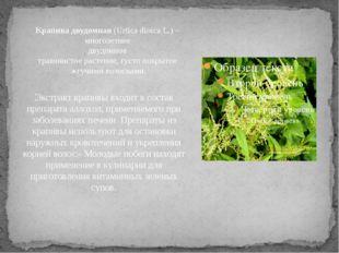 Экстракт крапивы входит в состав препарата аллохол, применяемого при заболева
