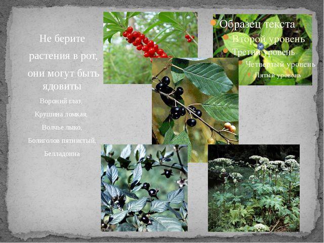 Не берите растения в рот, они могут быть ядовиты Вороний глаз, Крушина ломка...