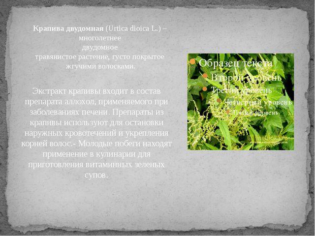 Экстракт крапивы входит в состав препарата аллохол, применяемого при заболева...