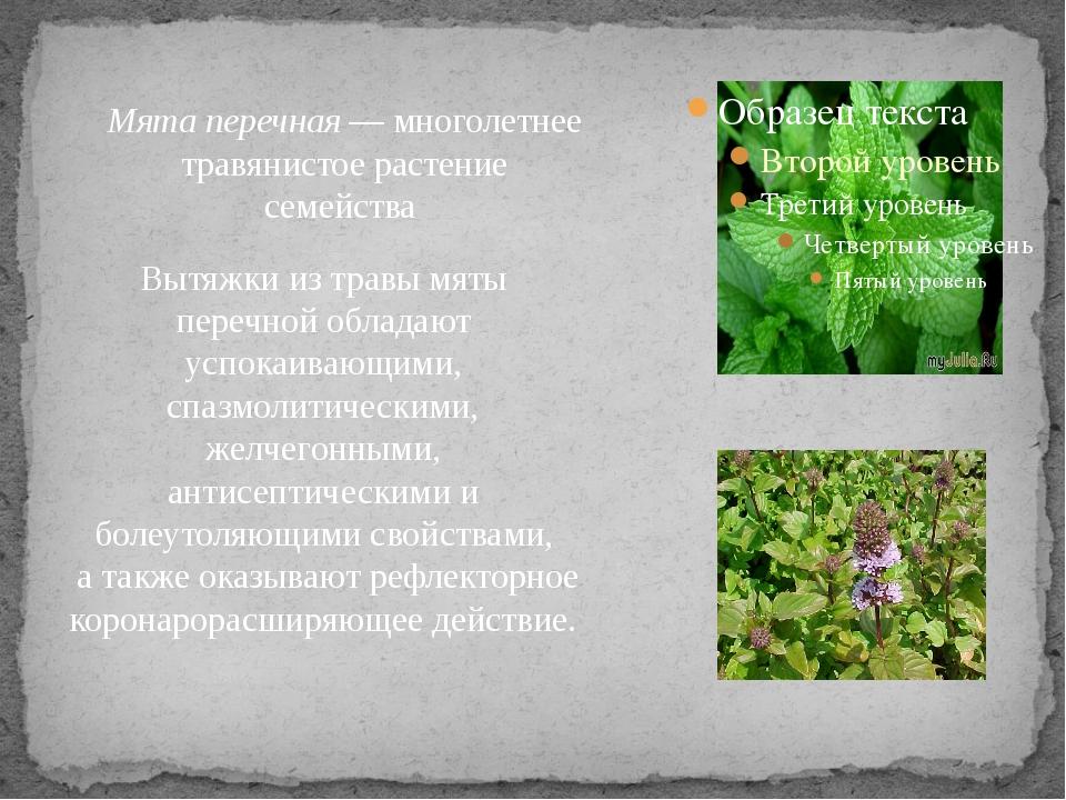 Мята перечная— многолетнее травянистое растение семейства Вытяжки из травы...