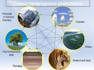 Схема природного комплекса Климат Воды Животный мир Почвы Растительный мир Ре