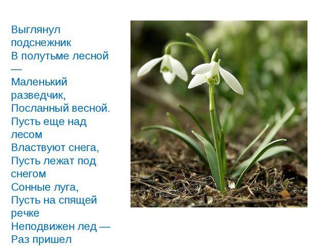 Выглянул подснежник В полутьме лесной — Маленький разведчик, Посланный весной...