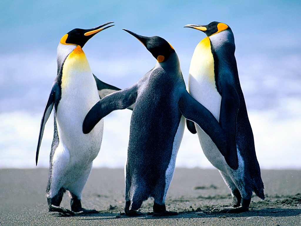 C:\Users\Public\Pictures\Sample Pictures\Penguins.jpg