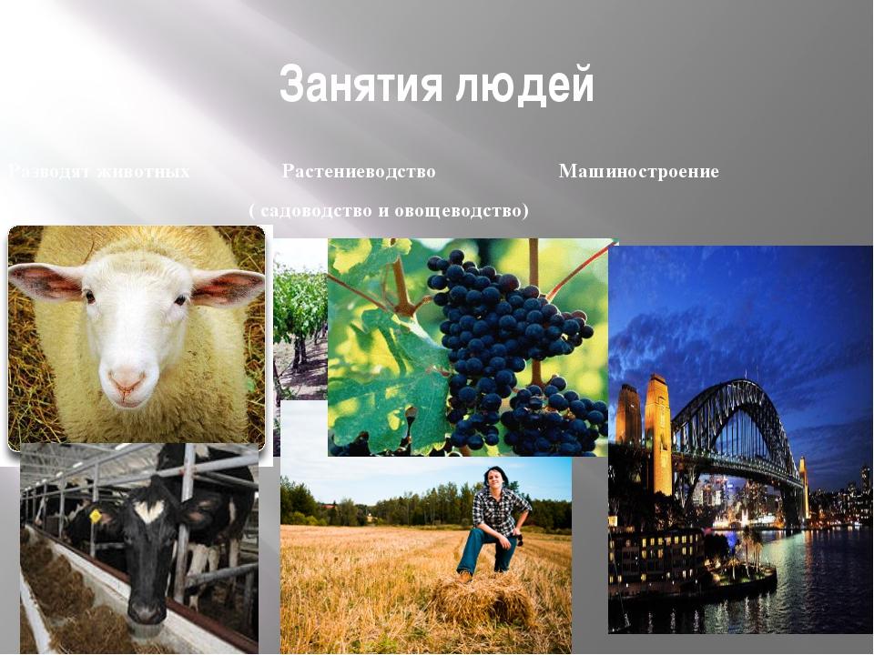 Занятия людей Разводят животных Растениеводство Машиностроение ( садоводство...