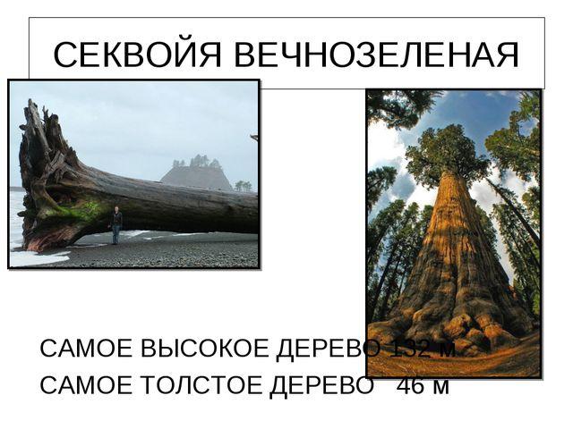 СЕКВОЙЯ ВЕЧНОЗЕЛЕНАЯ САМОЕ ВЫСОКОЕ ДЕРЕВО 132 м САМОЕ ТОЛСТОЕ ДЕРЕВО 46 м