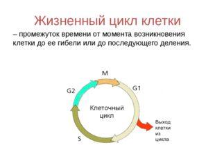 Жизненный цикл клетки – промежуток времени от момента возникновения клетки до
