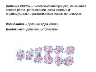 Деление клеток – биологический процесс, лежащий в основе роста, регенерации,