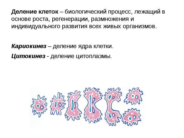 Деление клеток – биологический процесс, лежащий в основе роста, регенерации,...