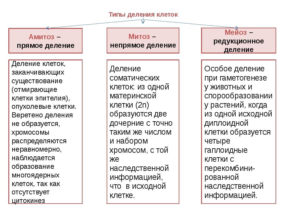 Типы деления клеток Амитоз – прямое деление Митоз – непрямое деление Мейоз –...