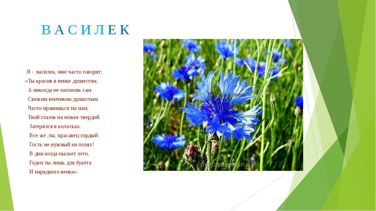 В А С И Л Е К Я - василек, мне часто говорят: «Ты красив в венке душистом, А...