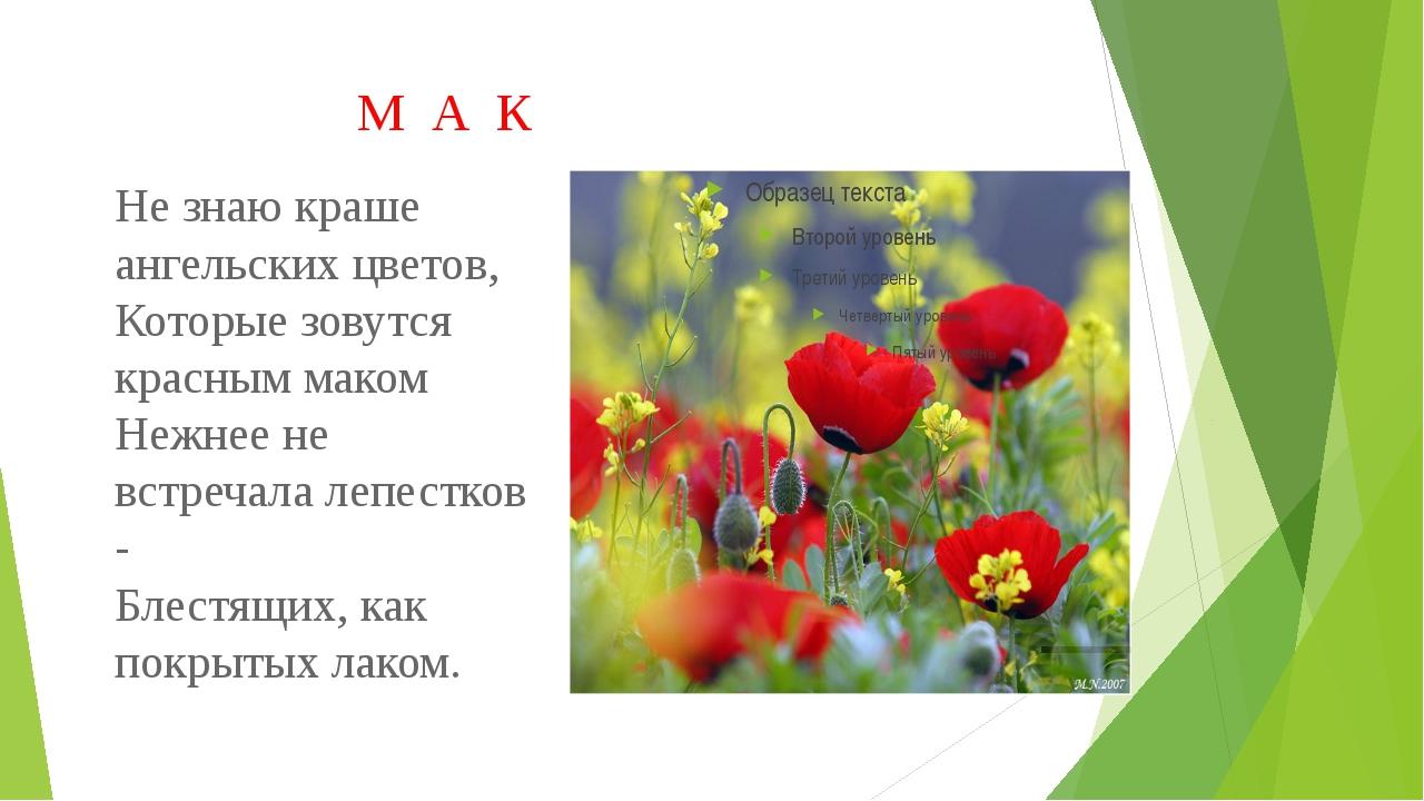 М А К Не знаю краше ангельских цветов, Которые зовутся красным маком Нежнее...