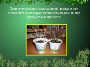 Сравнение внешнего вида растений, растущих при одинаковой температуре, одинак