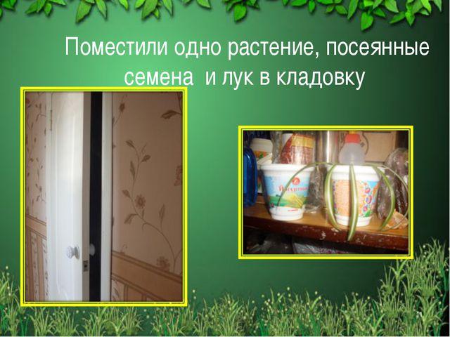 Поместили одно растение, посеянные семена и лук в кладовку *
