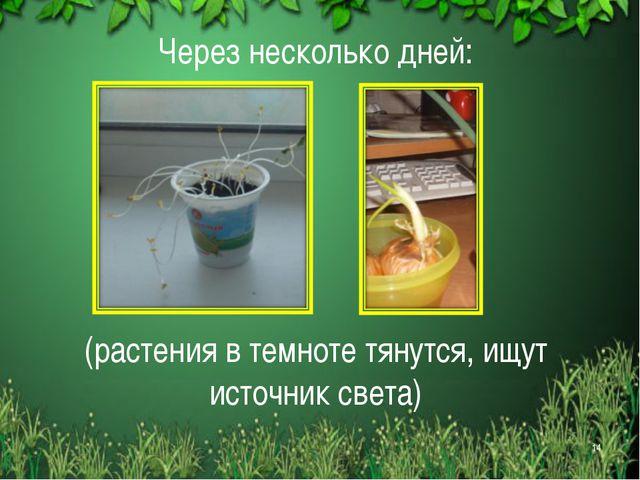 Через несколько дней: (растения в темноте тянутся, ищут источник света) *