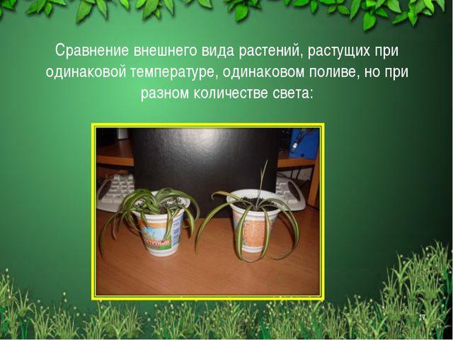 Сравнение внешнего вида растений, растущих при одинаковой температуре, одинак...