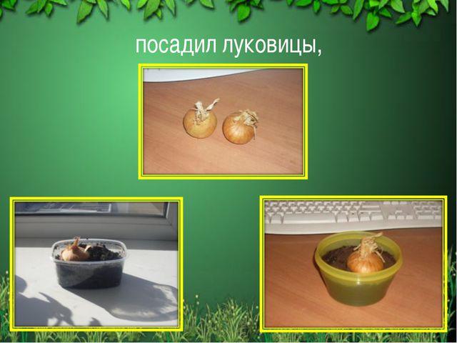 посадил луковицы, *
