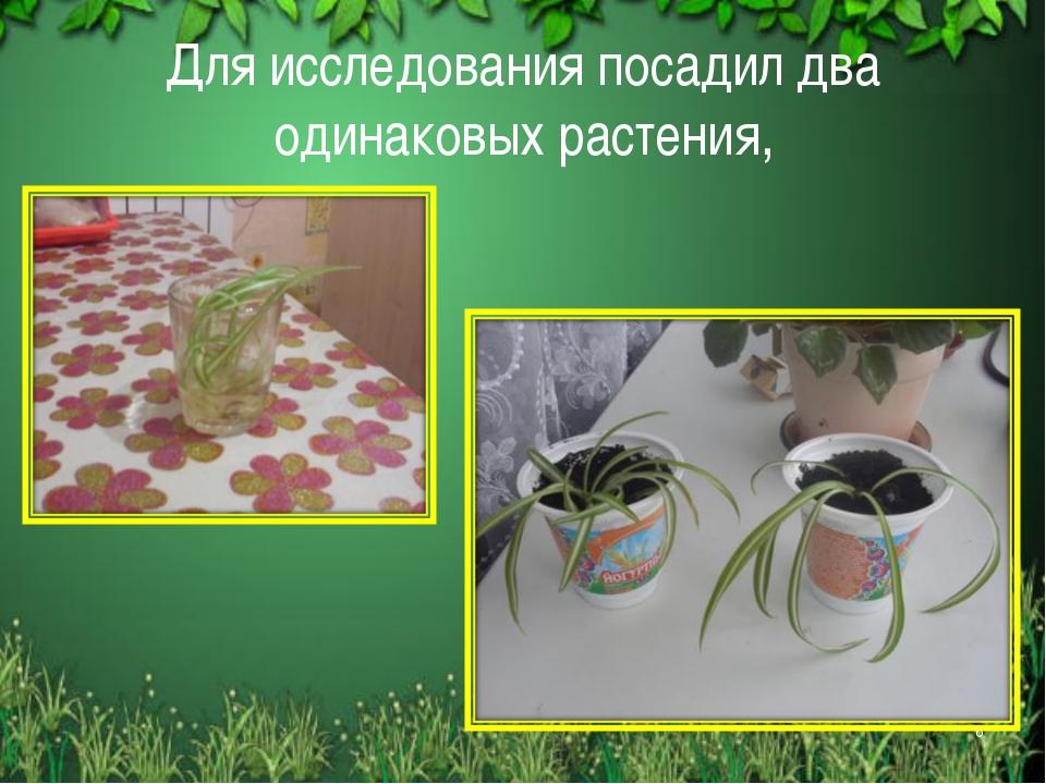 Для исследования посадил два одинаковых растения, *