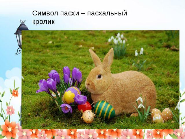 Символ пасхи – пасхальный кролик