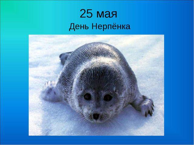 25 мая День Нерпёнка
