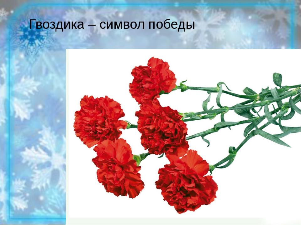 Гвоздика – символ победы