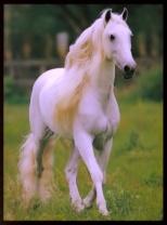20080620_120908_white_horse_sma.jpg