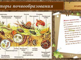 Факторы почвообразования Живые организмы, населяющие почву, в различных клим