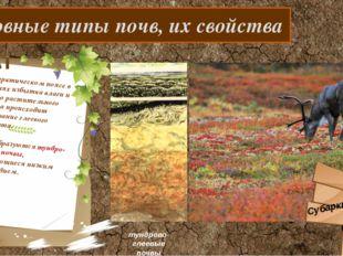Основные типы почв, их свойства В субарктическом поясе в условиях избытка вл