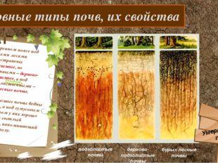 Основные типы почв, их свойства В умеренном поясе под хвойными лесами распро