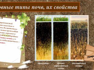 Основные типы почв, их свойства Под травянистой растительностью в условиях д