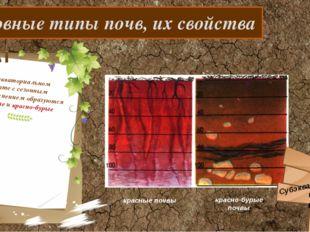 Основные типы почв, их свойства В субэкваториальном климате с сезонным увлаж