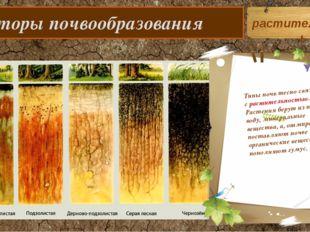 Факторы почвообразования Типы почв тесно связаны с растительностью. Растения