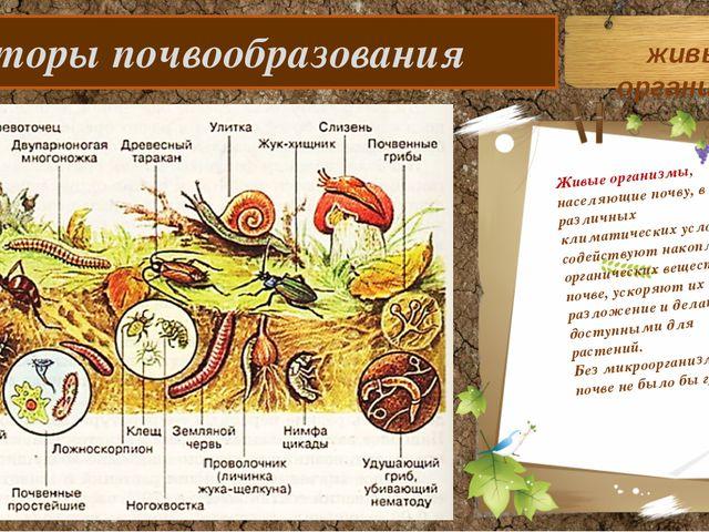 Факторы почвообразования Живые организмы, населяющие почву, в различных клим...