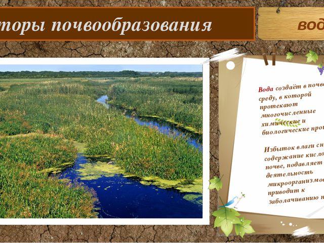 Факторы почвообразования Вода создаёт в почве среду, в которой протекают мно...