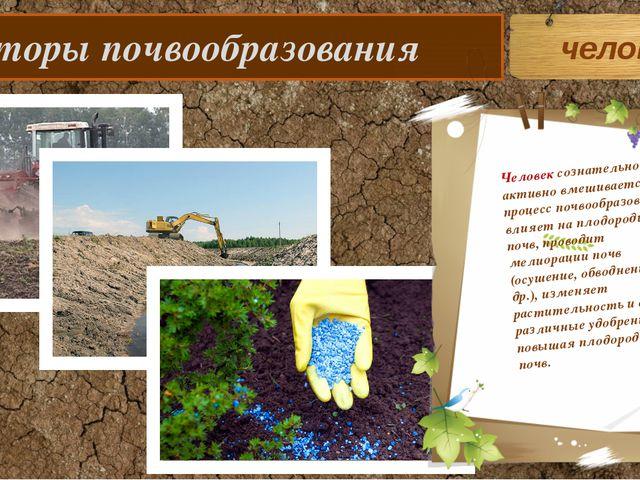 Факторы почвообразования человек Человек сознательно и активно вмешивается в...